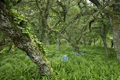 The Enchanted Forest (Chris Bainbridge1) Tags: terra nostra gardens furnas san miguel azores