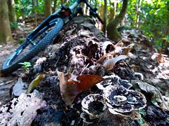 Ride with me (Rad.iant/Blan_k) Tags: palauubin mountainbike nature singapore blackdiamond island ketammountainbikepark