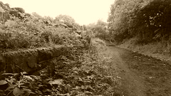 Platform at Wortley station  (Deepcar - Penistone old railway)    June 2017 (dave_attrill) Tags: wortley station railwaystation great central railway platform platformface overgrown sepia monochrome deepcar penistone building electrified woodhead sheffield victoria manchester picadilly closed 1970 1955 stocksbridge engine transpennine upper don trail wadsley neepsend dunford bridge allweather cycleway bridleway footpath remains gcr beeching cuts trackbed abandoned june 2017 trans pennine barnsley south yorkshire class76 cycle path