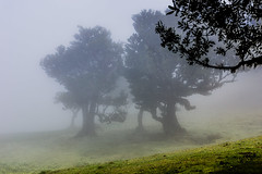 Silhouettes (*Capture the Moment*) Tags: 2017 fog insel island laurel lorbeer madeira mist nebel pauldaserralowlands sonye18200mmoss sonynex7 wetter wolkenclouds foggy