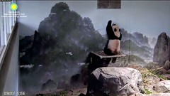 2017_07-04r (gkoo19681) Tags: beibei chubbycubby fuzzywuzzy reaching standingtall hopeful sotall poorbaby sosad ccncby nationalzoo