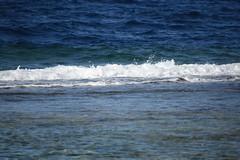 DSC_0195 (russellfenton) Tags: egypt marsaalam nikon nikon7200 7200 corayabeach steigenberger snorkelling sea boat