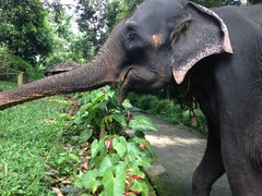 Volontariat avec les éléphants - GlobAlong (infoglobalong) Tags: sri lanka éléphants animaux aide animalier bénévolat asie excursions pêcheurs mahout bain cultures