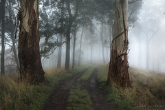 The Gatekeepers (Mark McLeod 80) Tags: australia ballarat fog markmcleod markmcleodphotography vic farm frost rural winter mtwarrenheip