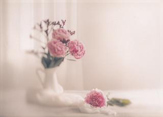 Elegant blooms