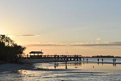 Captiva 2017EEF_4850_442 (efusco) Tags: birds captiva sanibel sailing sail wildlife alligator snake beach sunset white sand crab
