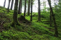 Norway | Roadtrip (Vilde Lauritzen) Tags: norway nature norwegian green landscape earthporn earth scandinavia europe greengrass