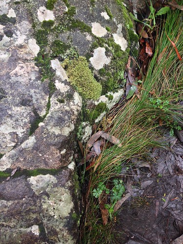Lichen, moss and rocks on Mount Macedon