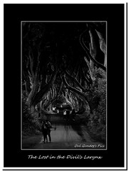 The Lost in the Divil's Larynx (Oul Gundog) Tags: dark hedges co antrim northern ireland game thornes ulster trees