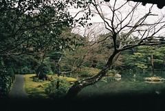 japanese garden (DianaDocherty) Tags: japanesegarden japan kyoto goldentemple film ishootfilm winter filmphotography