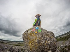 Wish we could be hitting the trails today instead of going to work! • • • • • #campingwithdogs #hikingwithdogs #dogsonadventures #dogsthathike #adventuredog #thestatelyhound #houndandlife #backcountrypaws #doglove #hikingdogsofinstagram #excellent_dogs #a (watson_the_adventure_dog) Tags: wish we could be hitting trails today instead going work • campingwithdogs hikingwithdogs dogsonadventures dogsthathike adventuredog thestatelyhound houndandlife backcountrypaws doglove hikingdogsofinstagram excellentdogs adventureswithdogs topdogphoto heelergram hikingdog animaladdicts traildog ireland bestwoof campingcollective visualsgang wanderireland instaireland inspireland irishpassion irelandgram campingculture stayandwander