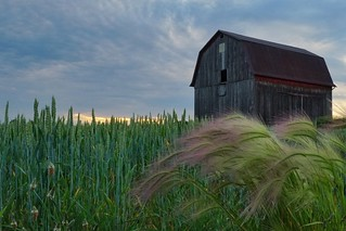 Michigan Country Side