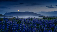 Moon over Kjos (DC Tink) Tags: europe europeanvacation fishinglodge friends iceland kjos moon mountains night river vacation earlymorning