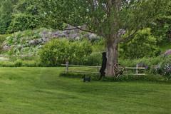 Dog on Leash (jta1950) Tags: dog chien sculpture landscape man pipe flowers d600