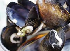 broken open (quietpurplehaze07) Tags: macromondays mussels shells broken macro