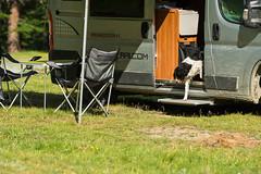 Relax nei boschi-15 ( YariGhidone ) Tags: rosso cesana lago nero claviere monti della luna van life vanlife campe furgone vita avventure adventure campfire camping wildlife wild camper