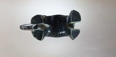 Elephant Bottom [explored] (Peter Branger) Tags: macro macromondays elephant bottomsup leica leicadlux5