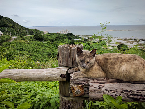 A cat, hanging out in front of the ocean