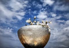 Fake Flowers (Pieter Musterd) Tags: bowl fakeflowers kunstbloemen sky lucht schaal kom pietermusterd musterd canon pmusterdziggonl nederland holland nl canon5dmarkii canon5d