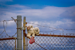 XOXO Fence Friday (KAM918) Tags: happy fence friday hff fenced massachusetts ma lowell nikon d750 summer bear xoxo barbed wire