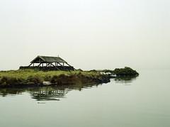 Heron in the Fog (Bruce Buckman) Tags: manukau fog seascape auckland newzealand 120film film kodakportra160 bronicaetrs zenzanoneii75mmf28