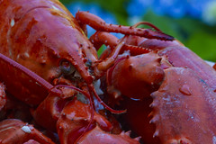 Ultimate Relaxation (brucetopher) Tags: relaxation macromondays red lobster summer food treat finefood coastal seafood shiny cooked steamed hot dinner relax macro canon7d 7d canon 100mml delicious cuisine tasty mouthwatering