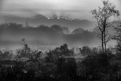 Spot the deer (dopol50) Tags: deer morning sunrise wood dunes dune waterleidingduinen mist fog