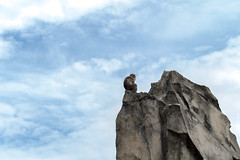 Viewed From The Top Of The Mountain - 孤高の猿 (hixar) Tags: japan uenozoo tokyo 日本 上野動物園 東京 山 mountain サル 猿 monkey sky 空 primates 霊長類 animal 動物