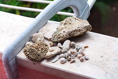 _DSC7643.jpg (Kaminscy) Tags: hrvatska windowsill zadar croatia europe treasures shell zadarskažupanija hr