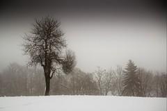 Haute-Savoie, Mont-Blanc, 16 (Patrick.Raymond (3M views)) Tags: montagne neige froid hiver gel alpes megève combloux hdr nikon arbre nikonflickraward