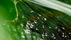 raindrops on web  Explored 7/6/2017  Thanks!!! (Hayseed52) Tags: web raindrops rain showers green drops water summershowers