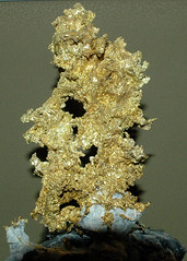 Placer County, CA Gold Nugget (PorchPhoto) Tags: nikond70s nikon losangeles losangelesmuseumofnaturalhistory museum display old mineral rock stone jem crystal exotic gold nugget native placer