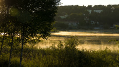 Aube dorée (Fred&rique) Tags: lumixfz1000 raw photoshop lac clairvaux jura aube lumière dorée nature paysage brume