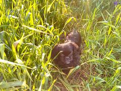 Зверушки 0390 (2016.05.21) (vladsky78) Tags: ильичёвск животные зелень поле собака