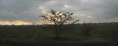 Horizonte (leograttoni) Tags: paisaje landscape horizonte árbol tree invierno winter atardecer sunset campo countryside airelibre laplata buenosaires