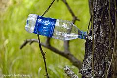 Creative Littering (Sage Girl Photography) Tags: littering dasani waterbottle carolinabeachstatepark wilmington northcarolina basintrail tree bark sagegirl nikond3300 outdoor nature