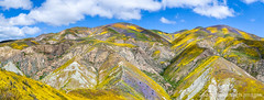 Panoramic view of flower covered hills below Mckittrick Summit, (Gary Rides Bikes) Tags: california carrizoplain carrizoplainnationalmonument mckittricksummit northamerica sanluisobispocounty springtime temblorrange usa beautyinnature blue cloudsky cumuluscloud cumulushumilis footpath goldcolored greencolor hill idyllic inbloom landscape mountain mountainrange mountainridge nature nopeople orangecolor panoramic plain purple remote scenicsnature vibrantcolor violet yellow