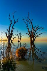 IMG_5414 (biglaptogs) Tags: barmera lakebonney riverland sa states