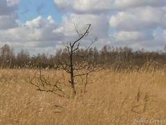 Naardermeer (Nelleke C) Tags: 2017 boom laagveen lake landscape landschap meer naardermeer nederland netherlands plas tree