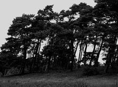 Waldhusener Forst 6 (Von Noorden) Tags: lübeck waldhusen forst wood forrest baum bäume tree trees cascades landscape timber nature natur leaves leave blatt blätter äste branch branches schleswigholstein deutschland black white blackandwhite bw sw schwarzweiss colour summer spring sommer frühling herbst autumn moos moss fence ruin decay stumpf people stone grave greaves stonegreave grab steingrab megalith dark dunkle dunkel old germany noiretblanc