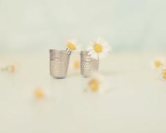 24/52 tiny (xelea) Tags: 7dwf tiny stilllife minúsculo