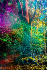 20170605-068 (sulamith.sallmann) Tags: landschaft natur blur bunt bäume colorful effect effekt filter folientechnik forest landscape nature trees unscharf wald brandenburg deutschland deu sulamithsallmann