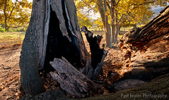 Greyton Oak Split Pano (Panorama Paul) Tags: paulbruinsphotography wwwpaulbruinscoza southafrica westerncape greyton overberg oaktrees autumn nikond800 nikkorlenses nikfilters panorama