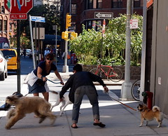 P1010347 (Vincent DiPietro) Tags: nyc women dogs mayhem panic streetscene