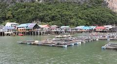 Ko Panyi (also known as Koh Panyee) is a fishing village in Phang Nga Province, Thailand, notable for being built on stilts by Indonesian fishermen. The population consists of 360 families or 1,685 people (raffaele pagani) Tags: kopanyi kohpanyee pulaupanji isola island villaggiodipescatori fishingvillage villaggiomusulmano muslimvillage indonesianfishermen phangngaprovince thailand palafitte stilt house village viaggiodinozze honeymoontrip honeymoon canon
