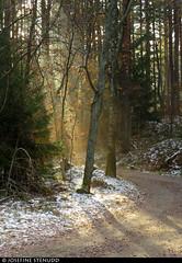 20161112_04 Sunrays on forest road | Änggårdsbergen, Gothenburg, Sweden (ratexla) Tags: forest 12nov2016 2016 canonpowershotsx50hs änggårdsbergen gothenburg göteborg goteborg nature sweden sverige scandinavia scandinavian europe landscape scenery scenic nordiccountries norden skandinavien beautiful earth tellus skog trees woods photophotospicturepicturesimageimagesfotofotonbildbilder hiking hike road gravelroad forestroad fall autumn höst hösten light rays godrays beam beams favorite