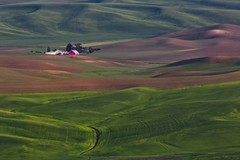 Farm in the Palouse (Alan Amati) Tags: amati alanamati america american usa us washington wa pacificnorthwest northwest palouse farm lateafternoon afternoon rolling hills wheat barn stream creek terrain spring colfax steptoe steptoebutte state park landscape rural country thepalouse spokane furtile screne peaceful fields crops