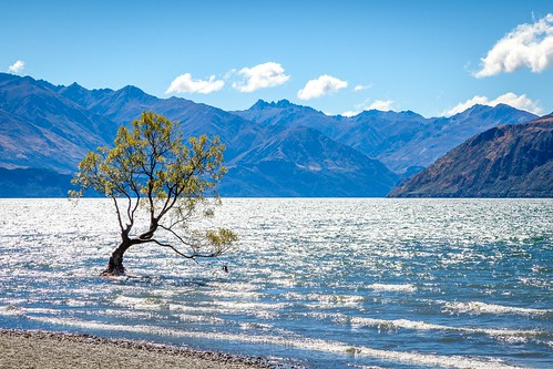 That Wanaka Tree-1