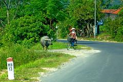 Vietnam Bike collection 3 (alain.diguet) Tags: vietnam color portrait human bike vélo landscape people gens alaindiguet street nikon nikond700