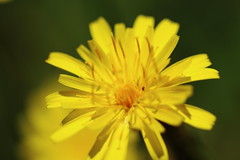 IMG_2609 (okiee8125) Tags: 浜離宮恩賜公園 庭園 park 花 flower